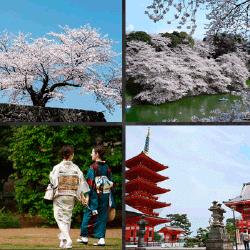 1 palabra 4 fotos paisaje japonés