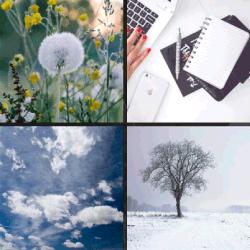 1 palabra 4 fotos árbol nieve cielo