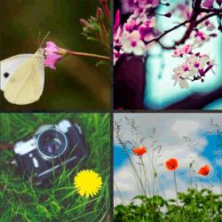1-Palabra-4-Fotos-nivel-17.35-flor