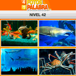 4-fotos-1-palabra-FB-nivel-42