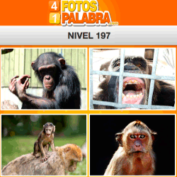 4-fotos-1-palabra-FB-nivel-197