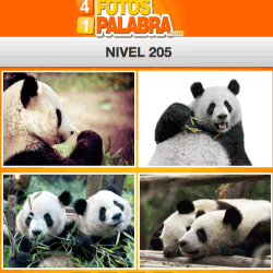 4-fotos-1-palabra-FB-nivel-205