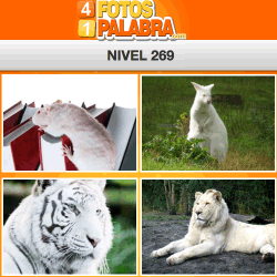 4-fotos-1-palabra-FB-nivel-269