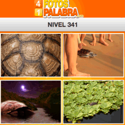 4-fotos-1-palabra-FB-nivel-341