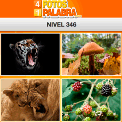 4-fotos-1-palabra-FB-nivel-346