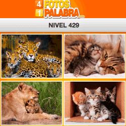 4-fotos-1-palabra-FB-nivel-429