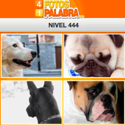 4-fotos-1-palabra-FB-nivel-444