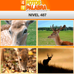 4-fotos-1-palabra-FB-nivel-487