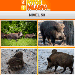 4-fotos-1-palabra-FB-nivel-53