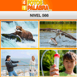 4-fotos-1-palabra-FB-nivel-566