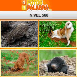 4-fotos-1-palabra-FB-nivel-568