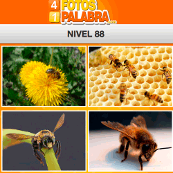 4-fotos-1-palabra-FB-nivel-88