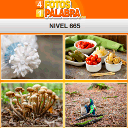 4-fotos-1-palabra-FB-nivel-665