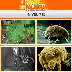 4 fotos 1 palabra FB nivel 715