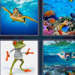 4 fotos 1 palabra tortuga marina