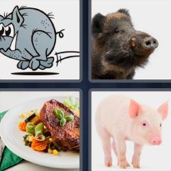 4 fotos 1 palabra cerdo jabalí