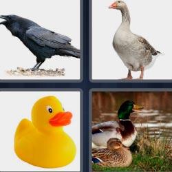 4 fotos 1 palabra cuervo