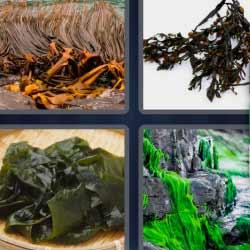 4 fotos 1 palabra 5 letras planta comida hojas
