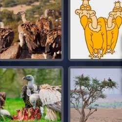 4 fotos 1 palabra cuatro aves