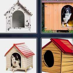 4 fotos 1 palabra casetas de perro