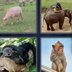 4 fotos 1 palabra mono elefante vaca