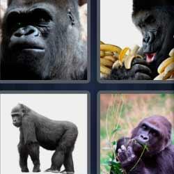 4 fotos 1 palabra mono pensando