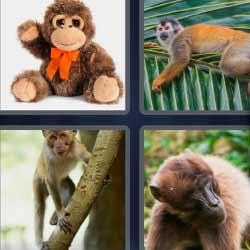 4 fotos 1 palabra peluche macaco mono