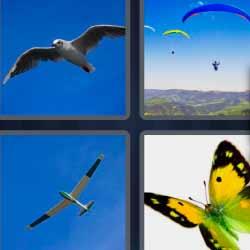 4 fotos 1 palabra gaviota mariposa parapente avión