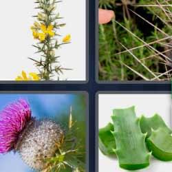 4 fotos 1 palabra cactus aloe vera
