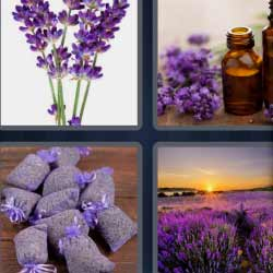 4 fotos 1 palabra flores de color violeta bote de cristal