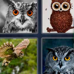 4 fotos 1 palabra 7 letras búho pájaro con grandes ojos