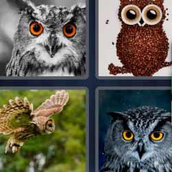4 fotos 1 palabra búho volando