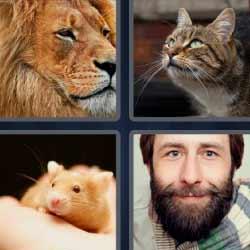 4 fotos 1 palabra león gato
