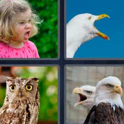 4 fotos 1 palabra búho águilas