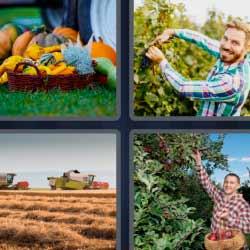 4 fotos 1 palabra canasta de frutas