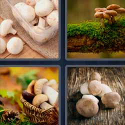 4 fotos 1 palabra champiñón