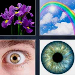 4 fotos 1 palabra flores violetas