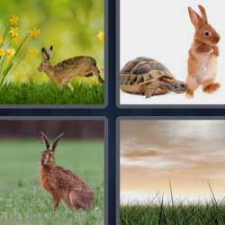 4 fotos 1 palabra conejo