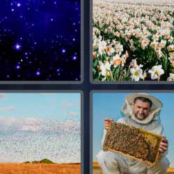4 fotos 1 palabra flores abejas