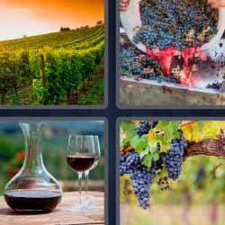 4 fotos 1 palabra uvas vino