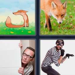 4 fotos 1 palabra zorrillo ladrón
