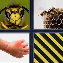4 fotos 1 palabra panal abeja mano