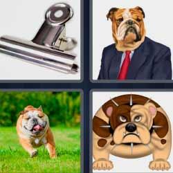 4 fotos 1 palabra perro con corbata