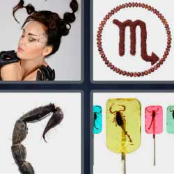4 fotos 1 palabra aguijón de escorpión