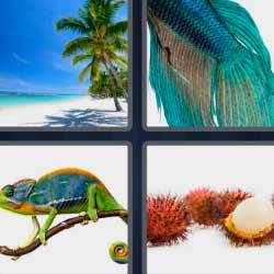 4 fotos 1 palabra pez azul camaleón