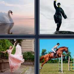 4 fotos 1 palabra cisne caballo