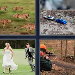 4 fotos 1 palabra leopardos novios cazador