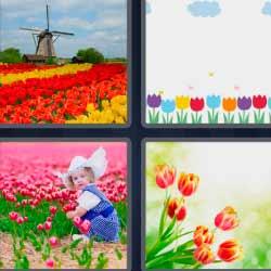 4 fotos 1 palabra flores de colores