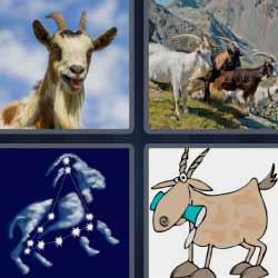 4 fotos 1 palabra venado