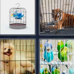 4 fotos 1 palabra pájaro en jaula